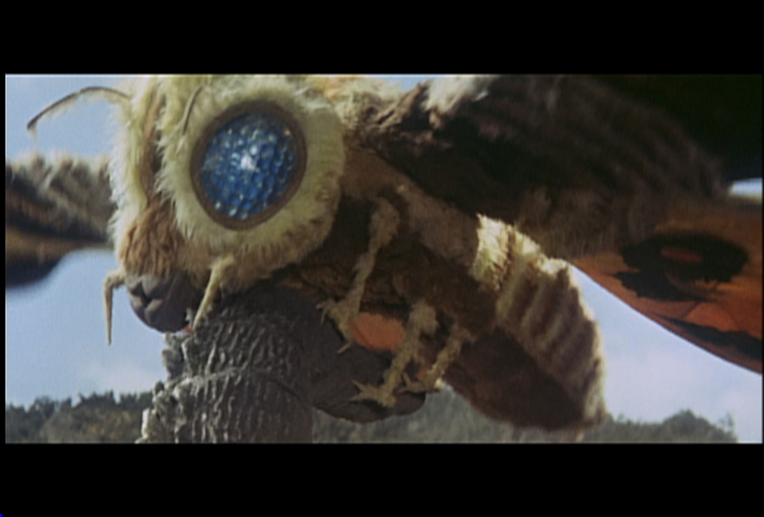 Mothra grabs Godzilla's tail.