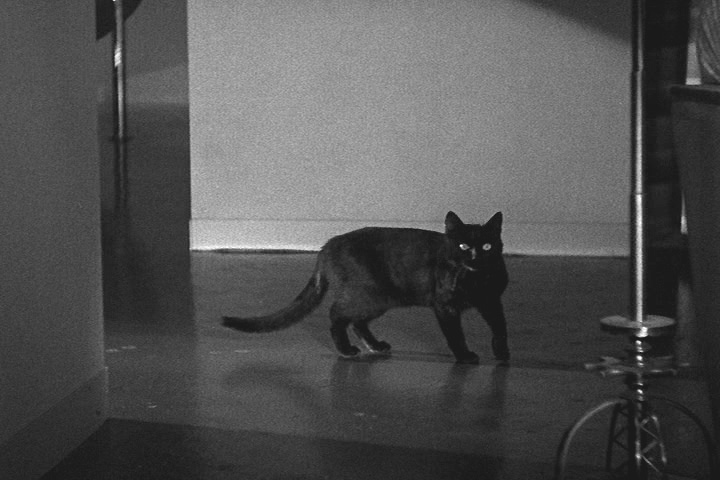 Black Cat, The (1934)