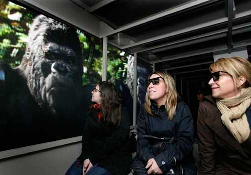 80BFC6F89F Sense of Wonder: King Kong stomps onto Universal Studios