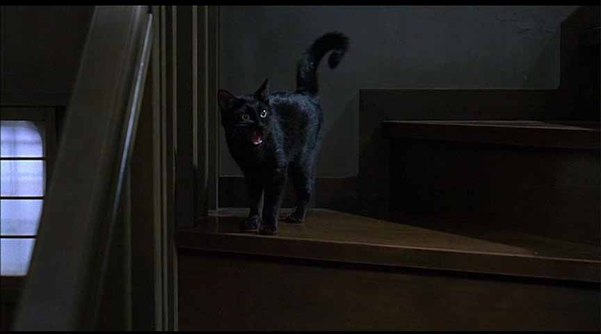 Toshio's ghost cat from THE GRUDGE