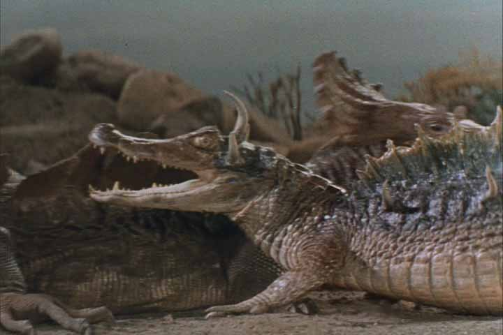 Pretending to be a dinosaur, an alligator fights a Komodo Dragon in the 'Terror on Dinosaur Island' episode of VOYAGE TO THE BOTTOM OF THE SEA. The footage is recycled from the 1961 feature film THE LOST WORLD.